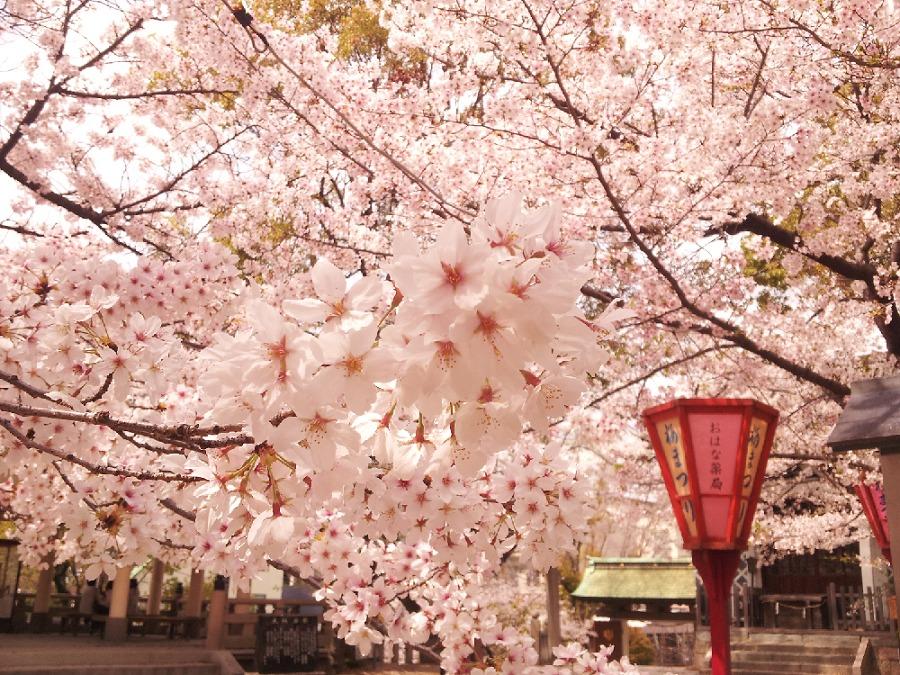 大阪市内のパワースポット・桜もきれいな高津宮 みつわ屋